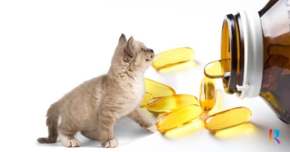 Minyak Ikan untuk Kucing RekomendasiMerk